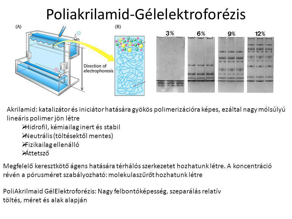 Poliakrilamid-Gélelektroforézis Akrilamid: katalizátor és iniciátor hatására gyökös polimerizációra képes, ezáltal nagy mólsúlyú lineáris polimer jön létre  Hidrofil, kémiailag inert és stabil  Neutrális (töltésektől mentes)  Fizikailag ellenálló  Áttetsző Megfelelő keresztkötő ágens hatására térhálós szerkezetet hozhatunk létre.