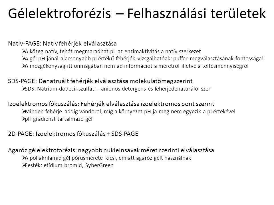 Gélelektroforézis – Felhasználási területek Natív-PAGE: Natív fehérjék elválasztása  A közeg natív, tehát megmaradhat pl.