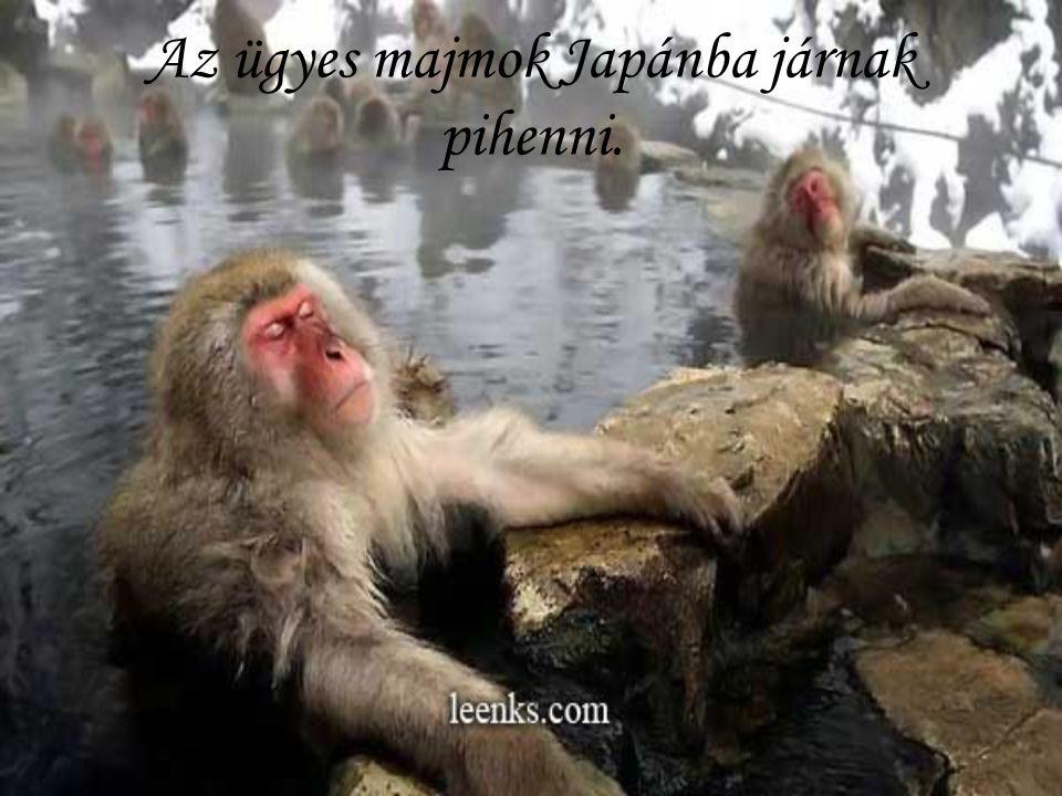 Az ügyes majmok Japánba járnak pihenni.