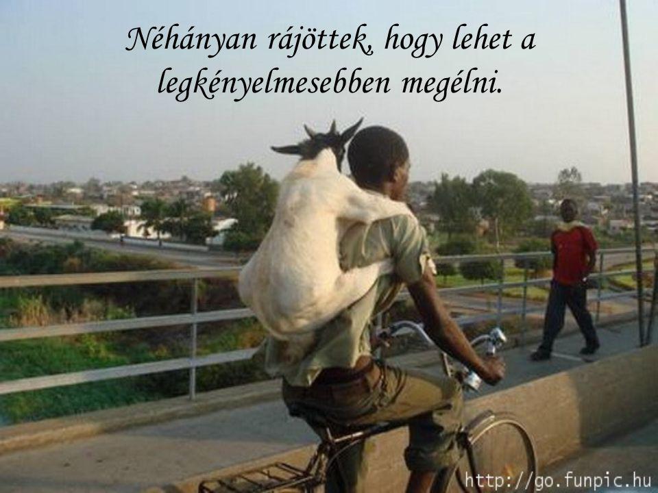 Az állatok nehezen tűrik, ha korlátozzák a szabadságukat!