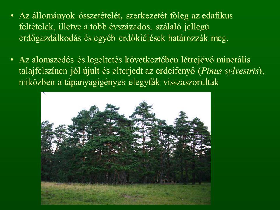 Az állományok összetételét, szerkezetét főleg az edafikus feltételek, illetve a több évszázados, szálaló jellegú erdőgazdálkodás és egyéb erdőkiélések határozzák meg.