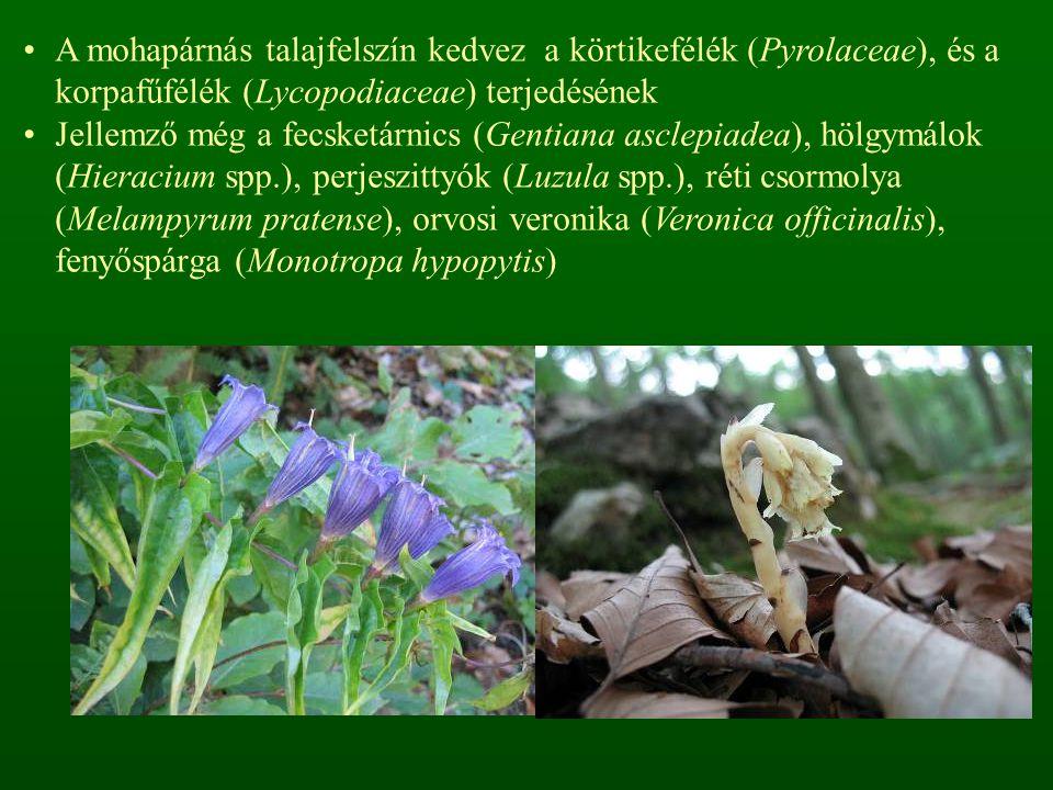 A mohapárnás talajfelszín kedvez a körtikefélék (Pyrolaceae), és a korpafűfélék (Lycopodiaceae) terjedésének Jellemző még a fecsketárnics (Gentiana asclepiadea), hölgymálok (Hieracium spp.), perjeszittyók (Luzula spp.), réti csormolya (Melampyrum pratense), orvosi veronika (Veronica officinalis), fenyőspárga (Monotropa hypopytis)