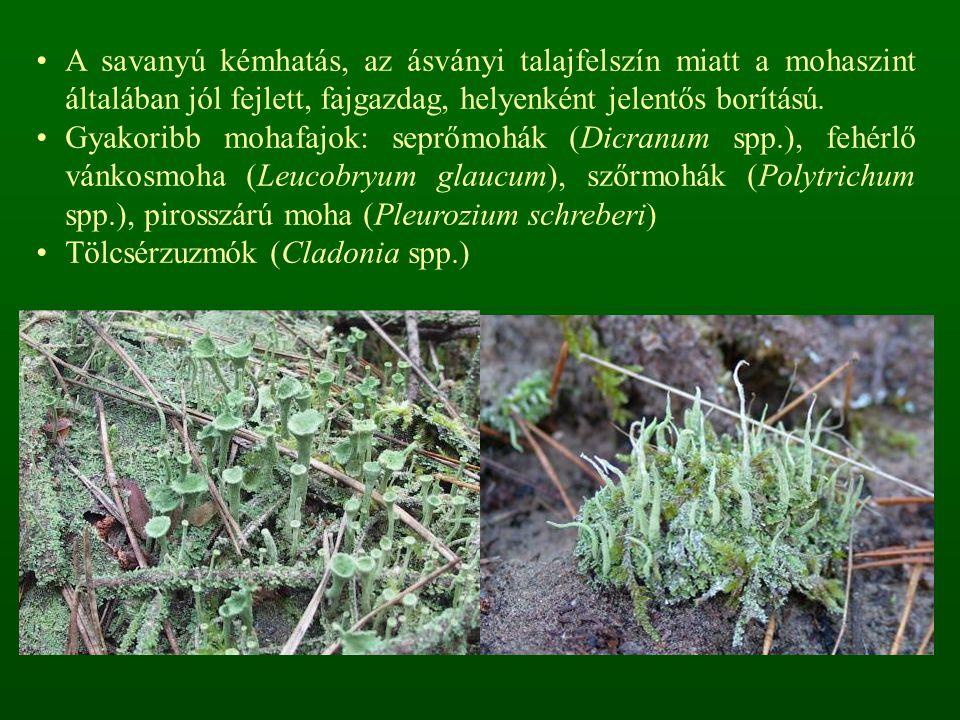 A savanyú kémhatás, az ásványi talajfelszín miatt a mohaszint általában jól fejlett, fajgazdag, helyenként jelentős borítású.