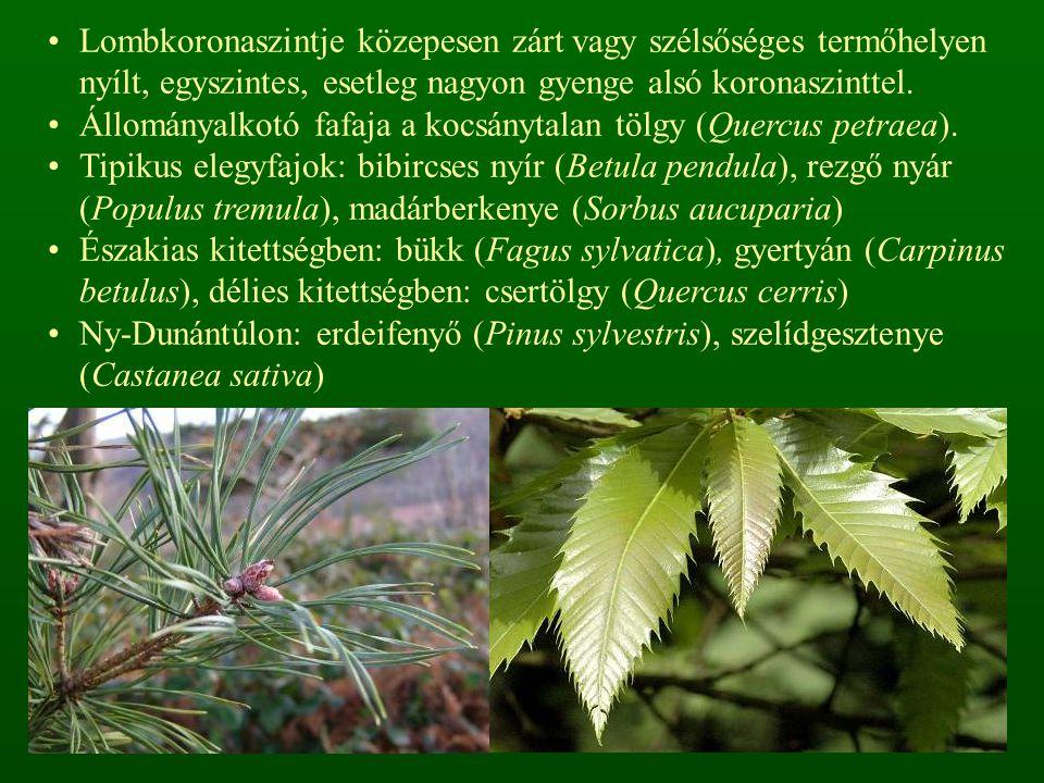 A gyepszint fajszegény, változó borítású, higrofil fajokból áll.