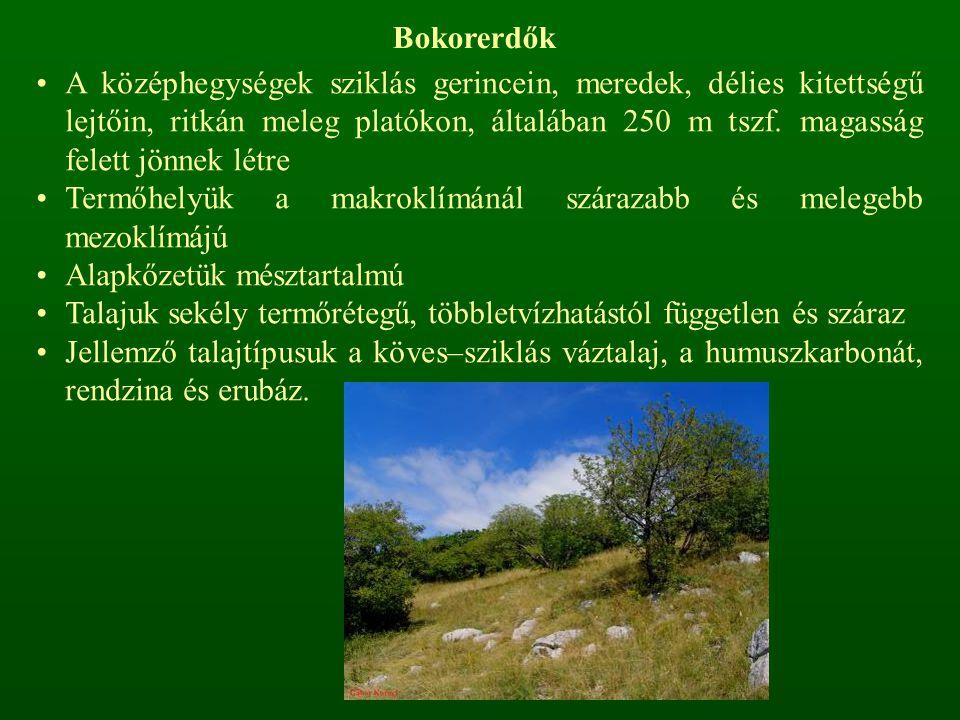 Bokorerdők A középhegységek sziklás gerincein, meredek, délies kitettségű lejtőin, ritkán meleg platókon, általában 250 m tszf.