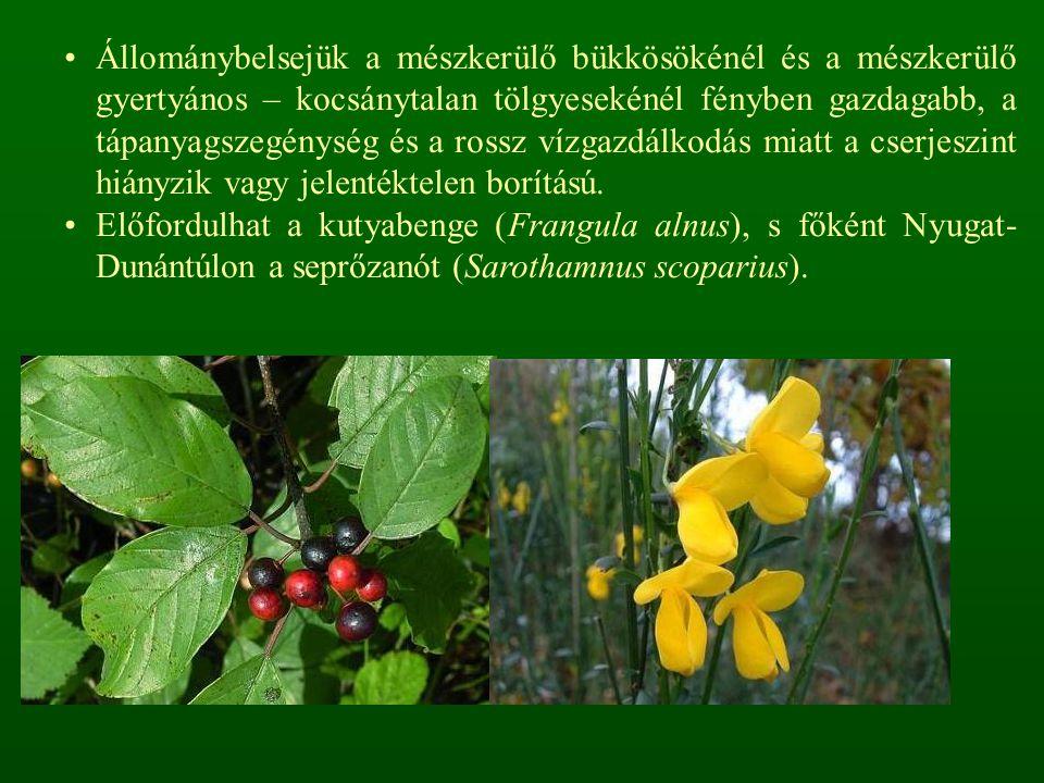 A bolygatás miatt számos az egyéves ruderális faj: disznóparéjok (Amaranthus spp.), libatopok (Chenopodium spp.), labodák (Atriplex spp.), subás farkasfog (Bidens tripartita).