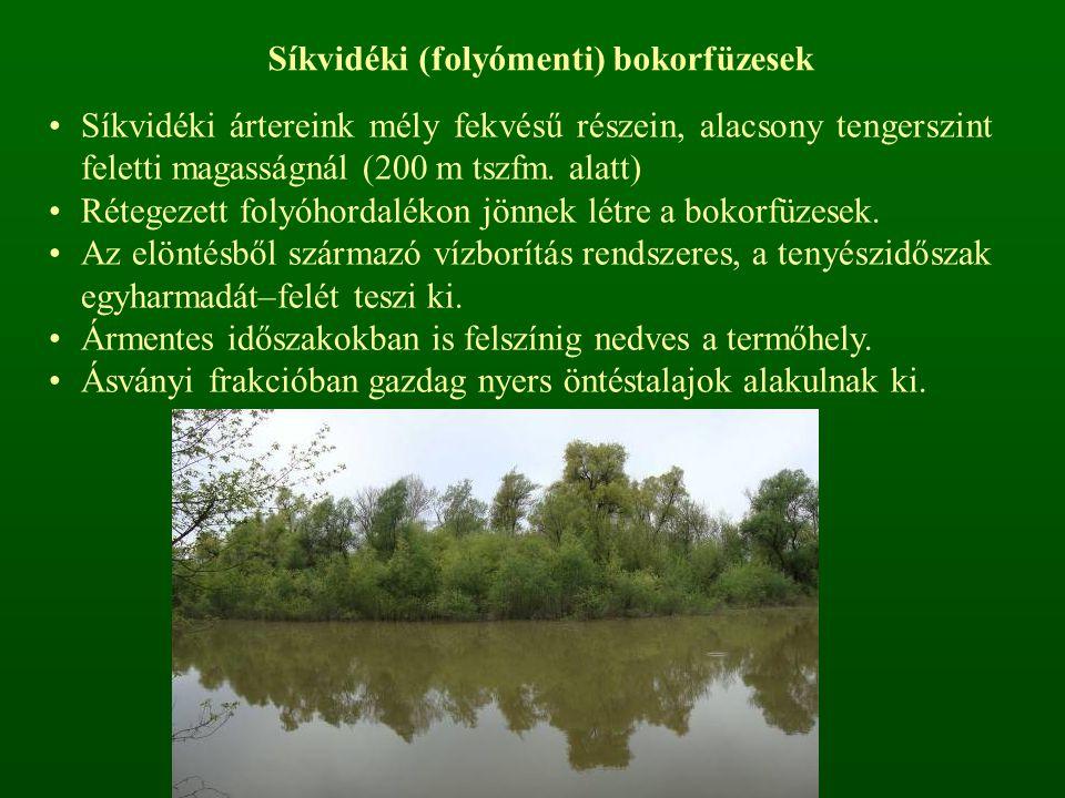 Síkvidéki (folyómenti) bokorfüzesek Síkvidéki ártereink mély fekvésű részein, alacsony tengerszint feletti magasságnál (200 m tszfm.