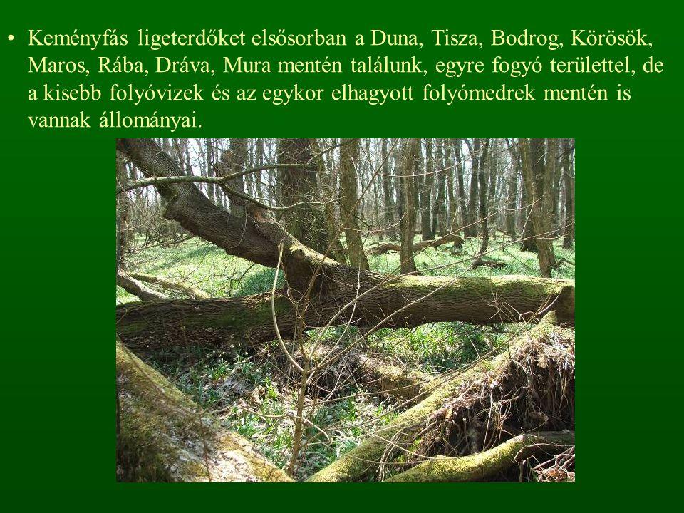 Keményfás ligeterdőket elsősorban a Duna, Tisza, Bodrog, Körösök, Maros, Rába, Dráva, Mura mentén találunk, egyre fogyó területtel, de a kisebb folyóvizek és az egykor elhagyott folyómedrek mentén is vannak állományai.
