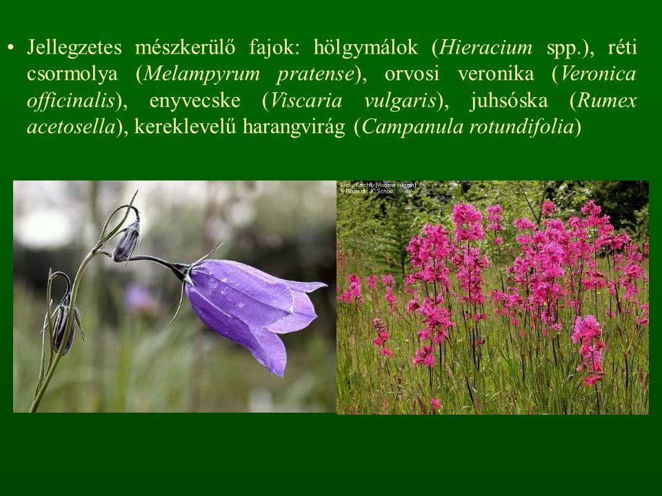 Jellegzetes mészkerülő fajok: hölgymálok (Hieracium spp.), réti csormolya (Melampyrum pratense), orvosi veronika (Veronica officinalis), enyvecske (Viscaria vulgaris), juhsóska (Rumex acetosella), kereklevelű harangvirág (Campanula rotundifolia)