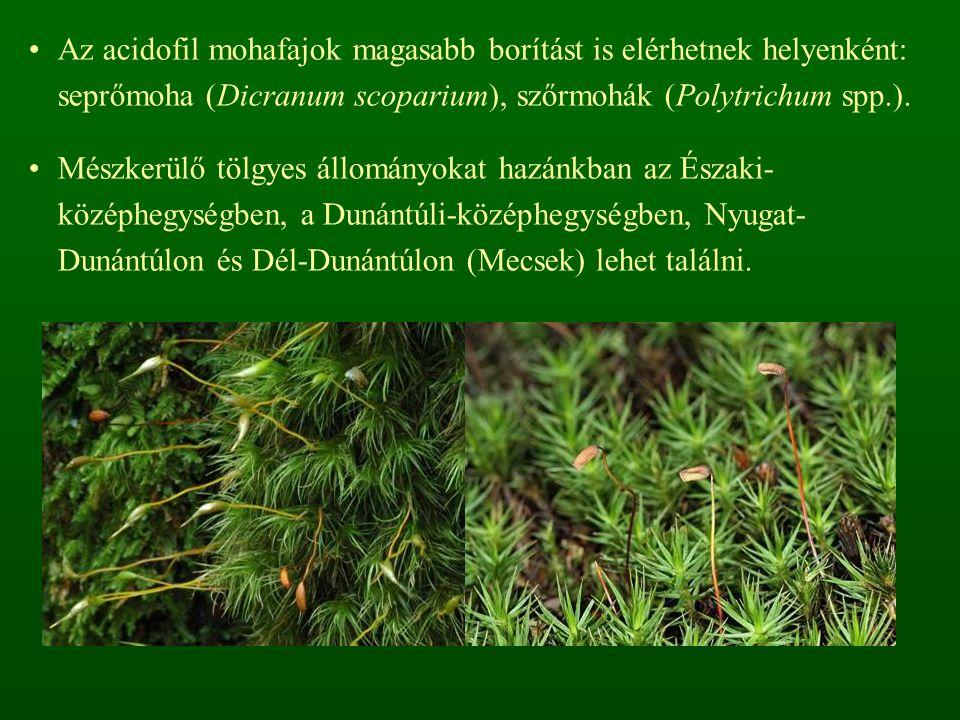 Közepes vagy magas borítású fajgazdag cserjeszint jön létre: cseregalagonya (Crataegus laevigata), vörösgyűrűsom (Cornus sanguinea), mogyoró (Corylus avellana), kányabangita (Viburnum opulus), varjútövisbenge (Rhamnus catharticus), csíkos kecskerágó (Euonymus europaeus), hamvas szeder (Rubus caesius), kutyabenge (Frangula alnus), tatár juhar (Acer tataricum), vörös ribiszke (Ribes rubrum ssp.