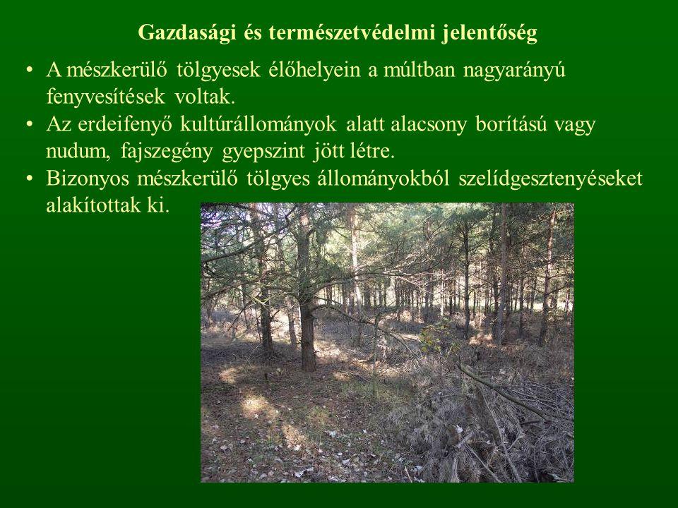 Fenyőelegyes – tölgyesek DNy-Dunántúlon széles, lapos dombhátakon, átlagosan 250–350 m tszf.