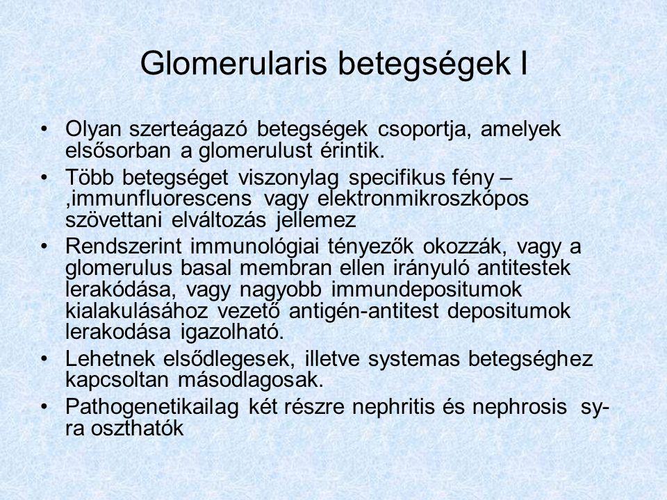 Glomerularis betegségek I Olyan szerteágazó betegségek csoportja, amelyek elsősorban a glomerulust érintik. Több betegséget viszonylag specifikus fény