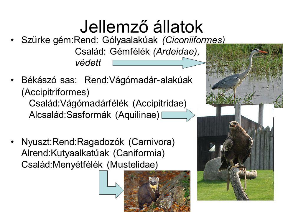 Jellemző állatok Szürke gém:Rend: Gólyaalakúak (Ciconiiformes) Család: Gémfélék (Ardeidae), védett Békászó sas: Rend:Vágómadár-alakúak (Accipitriformes) Család:Vágómadárfélék (Accipitridae) Alcsalád:Sasformák (Aquilinae) Nyuszt:Rend:Ragadozók (Carnivora) Alrend:Kutyaalkatúak (Caniformia) Család:Menyétfélék (Mustelidae)