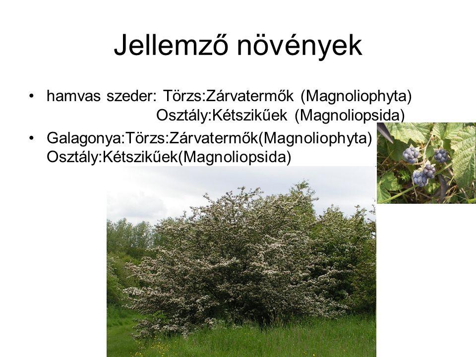 Jellemző növények hamvas szeder: Törzs:Zárvatermők (Magnoliophyta) Osztály:Kétszikűek (Magnoliopsida) Galagonya:Törzs:Zárvatermők(Magnoliophyta) Osztály:Kétszikűek(Magnoliopsida)