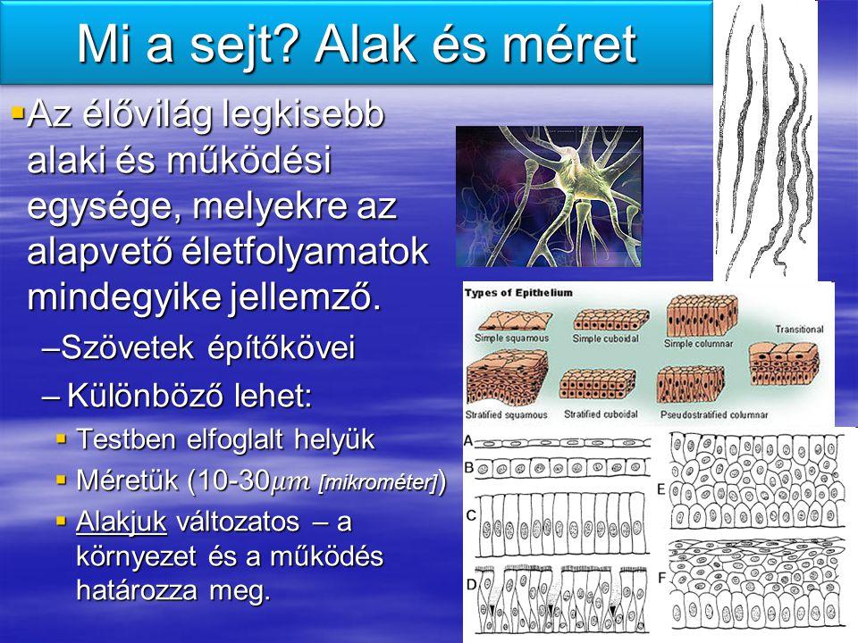 Mi a sejt? Alak és méret
