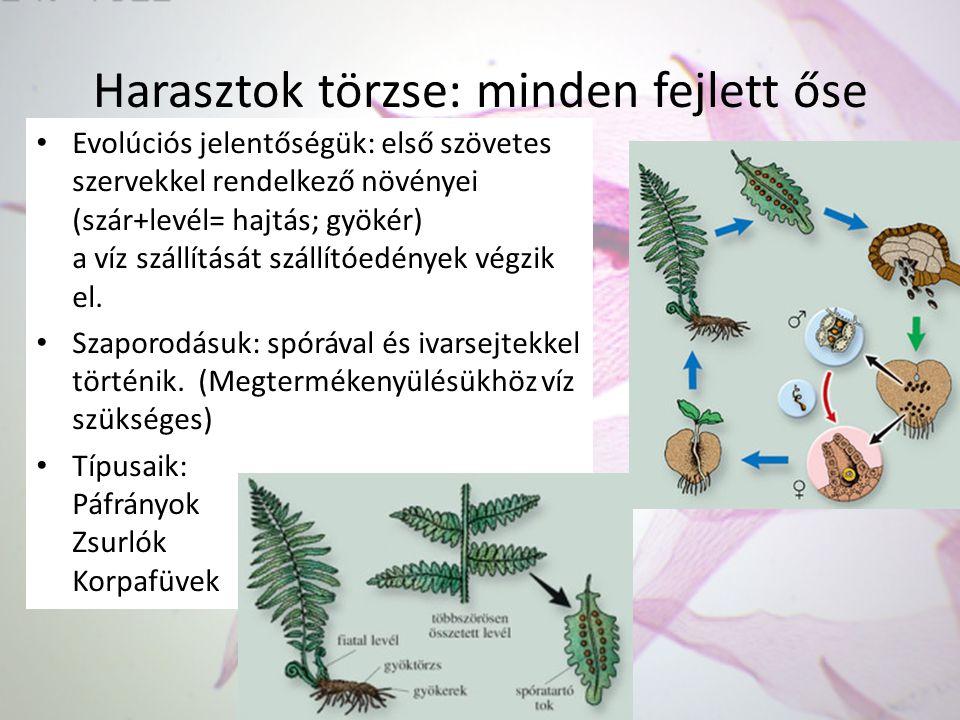 Harasztok törzse: minden fejlett őse Evolúciós jelentőségük: első szövetes szervekkel rendelkező növényei (szár+levél= hajtás; gyökér) a víz szállítás