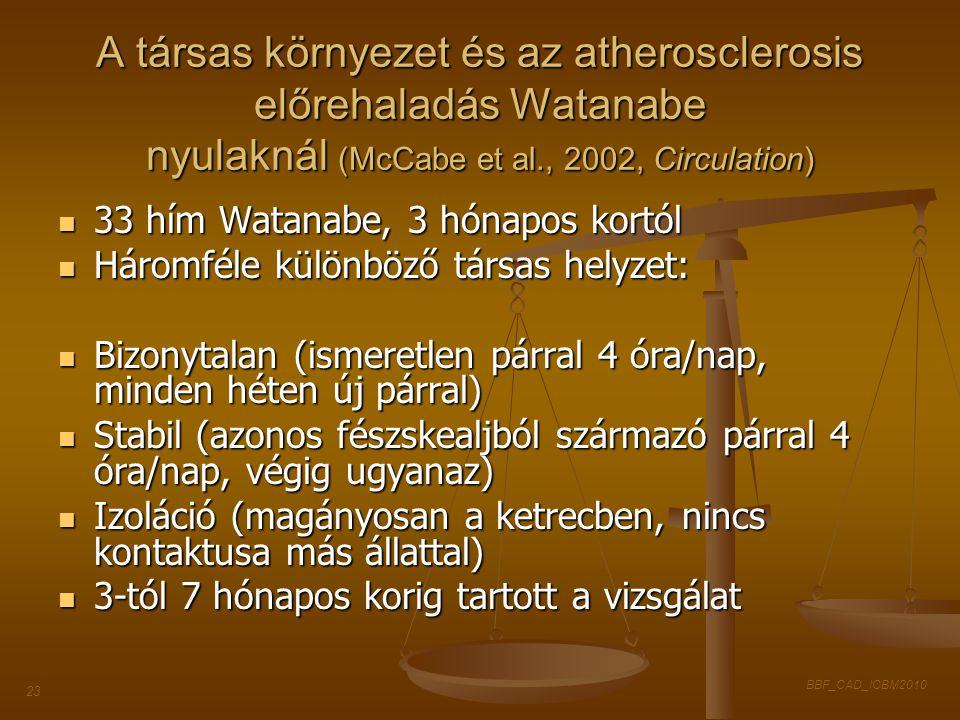 BBF_CAD_ICBM2010 23 A társas környezet és az atherosclerosis előrehaladás Watanabe nyulaknál (McCabe et al., 2002, Circulation) 33 hím Watanabe, 3 hón