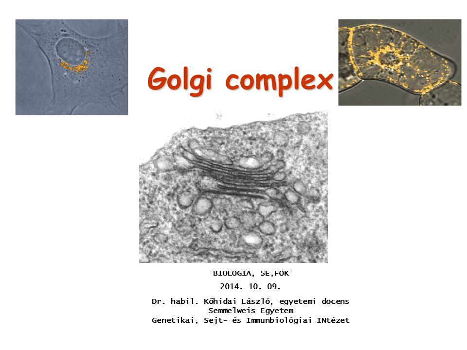 Golgi complex BIOLOGIA, SE,FOK 2014. 10. 09. Dr. habil. Kőhidai László, egyetemi docens Semmelweis Egyetem Genetikai, Sejt- és Immunbiológiai INtézet