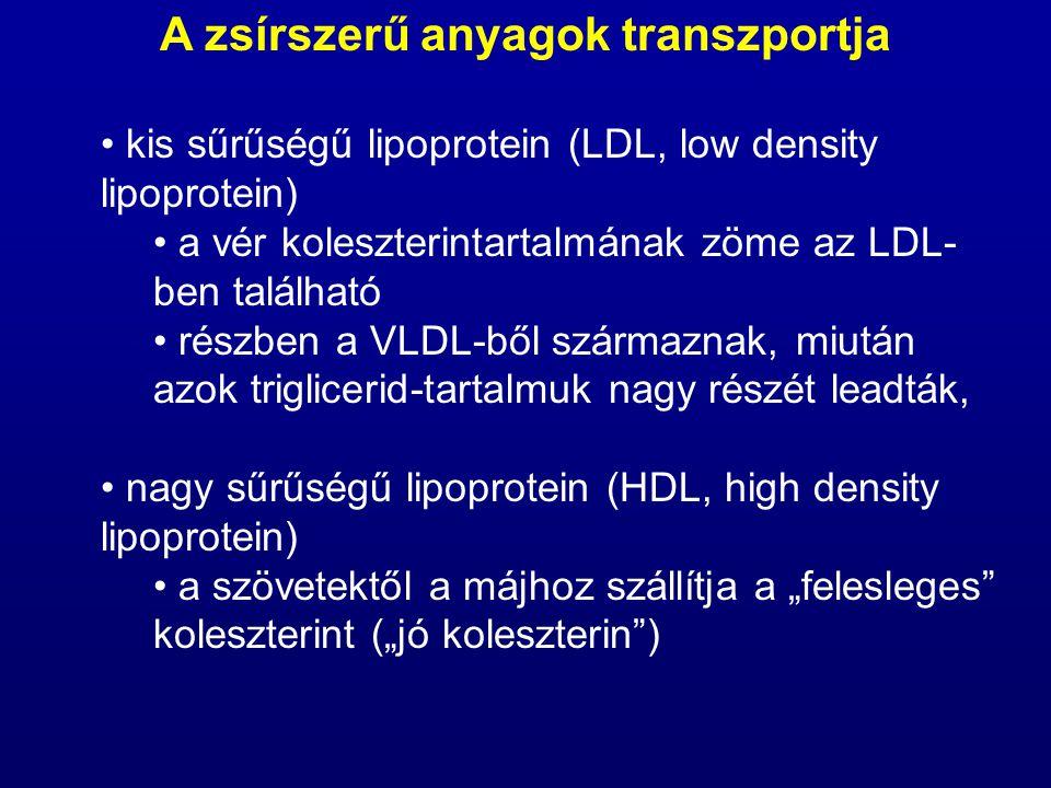 kis sűrűségű lipoprotein (LDL, low density lipoprotein) a vér koleszterintartalmának zöme az LDL- ben található részben a VLDL-ből származnak, miután