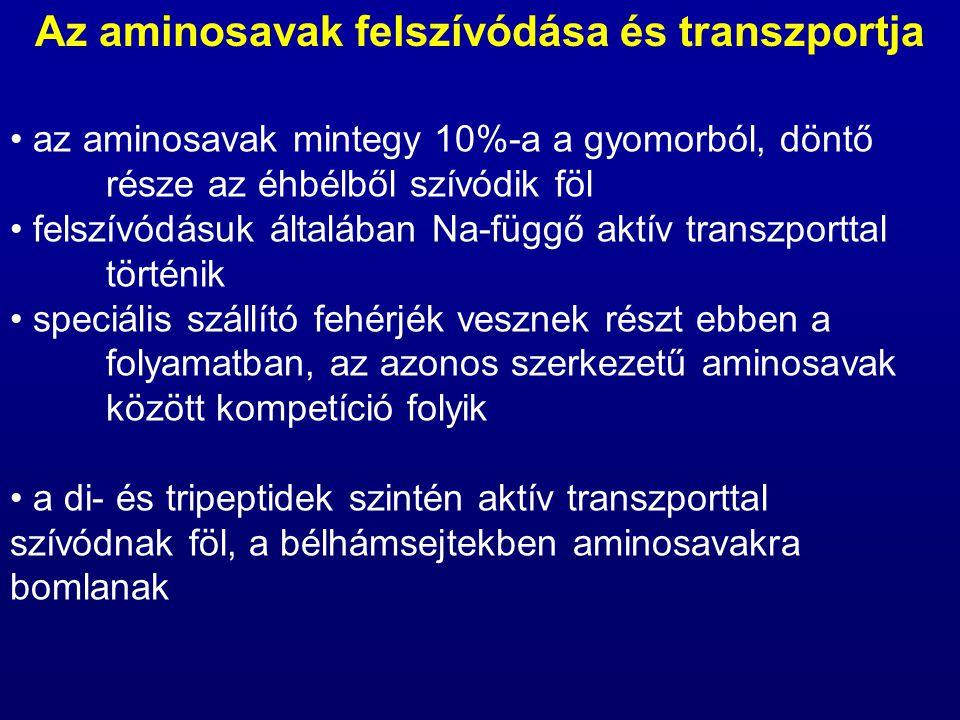 az aminosavak mintegy 10%-a a gyomorból, döntő része az éhbélből szívódik föl felszívódásuk általában Na-függő aktív transzporttal történik speciális