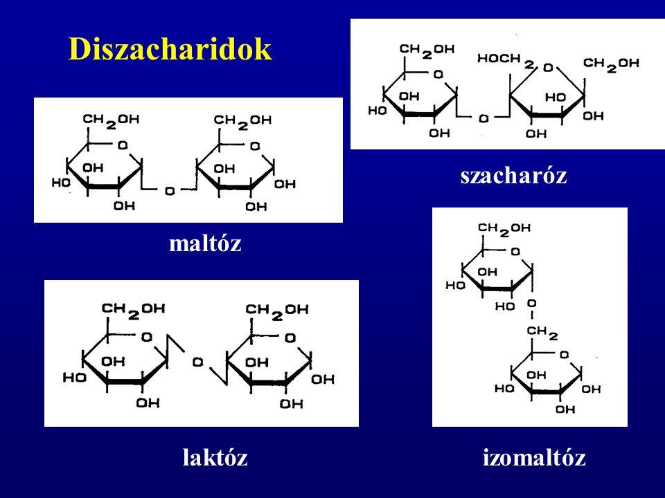 szacharóz Diszacharidok izomaltózlaktóz maltóz
