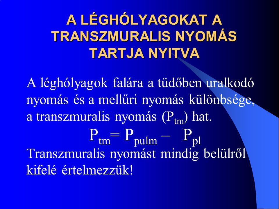 A LÉGHÓLYAGOKAT A TRANSZMURALIS NYOMÁS TARTJA NYITVA A léghólyagok falára a tüdőben uralkodó nyomás és a mellűri nyomás különbsége, a transzmuralis ny