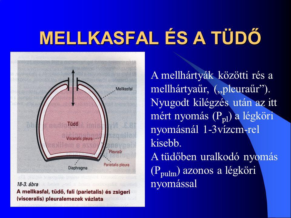 """MELLKASFAL ÉS A TÜDŐ A mellhártyák közötti rés a mellhártyaűr, (""""pleuraűr""""). Nyugodt kilégzés után az itt mért nyomás (P pl ) a légköri nyomásnál 1-3v"""