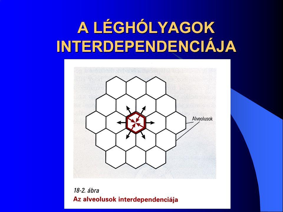 A LÉGHÓLYAGOK INTERDEPENDENCIÁJA