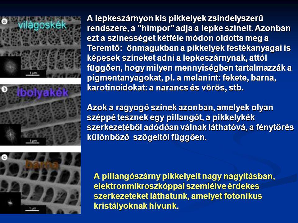 A pillangószárny pikkelyeit nagy nagyításban, elektronmikroszkóppal szemlélve érdekes szerkezeteket láthatunk, amelyet fotonikus kristályoknak hívunk.