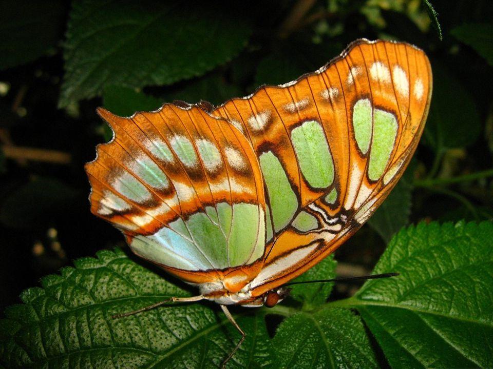 Hamarosan csodaszép pillangó lesz belőlem!