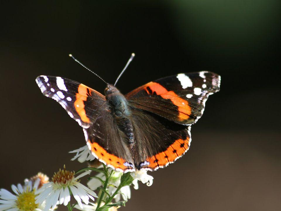 Als die Raupe dachte Als die Raupe dachte Die Welt geht unter, Die Welt geht unter, Wurde sie zum Wurde sie zum Schmetterling Schmetterling