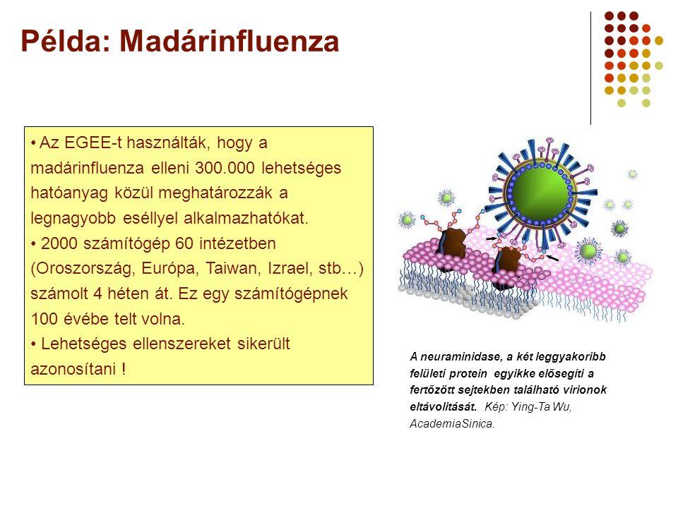Példa: Madárinfluenza A neuraminidase, a két leggyakoribb felületi protein egyikke elősegíti a fertőzött sejtekben található virionok eltávolitását.