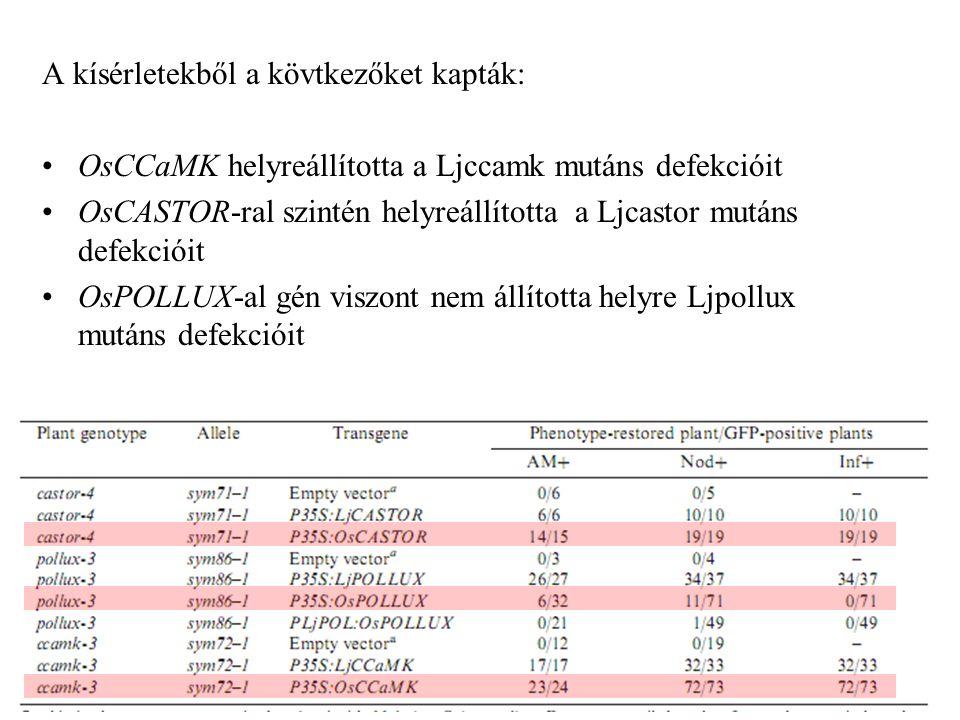 A kísérletekből a kövtkezőket kapták: OsCCaMK helyreállította a Ljccamk mutáns defekcióit OsCASTOR-ral szintén helyreállította a Ljcastor mutáns defek