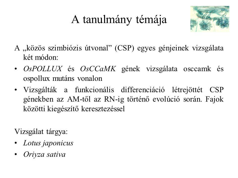 """A tanulmány témája A """"közös szimbiózis útvonal"""" (CSP) egyes génjeinek vizsgálata két módon: OsPOLLUX és OsCCaMK gének vizsgálata osccamk és ospollux m"""