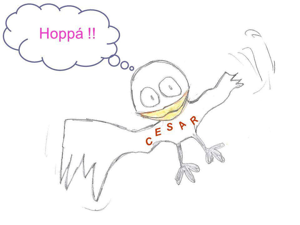 C E S A R Hoppá !!