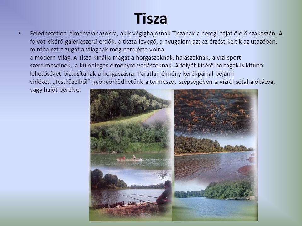 Tisza Feledhetetlen élményvár azokra, akik végighajóznak Tiszának a beregi tájat ölelő szakaszán. A folyót kísérő galériaszerű erdők, a tiszta levegő,