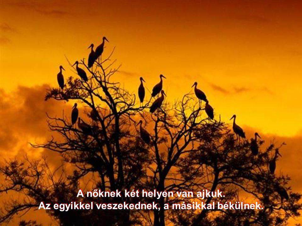 Az élet olyan mint az ideális férfi szerszáma, hosszú és kemény.