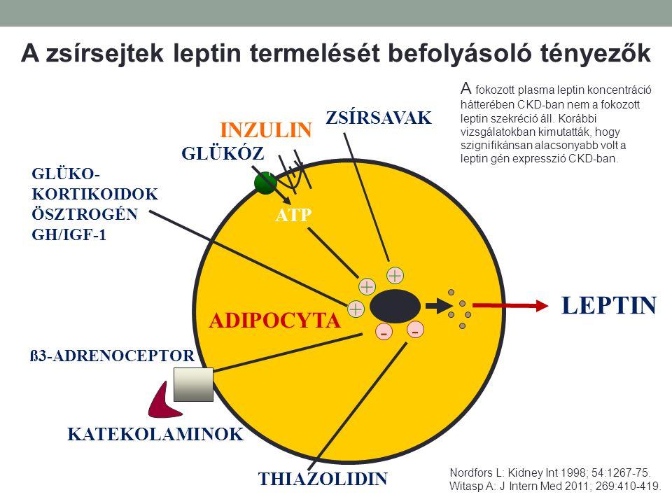 ADIPOCYTA LEPTIN + + - + - ZSÍRSAVAK INZULIN GLÜKÓZ ATP + GLÜKO- KORTIKOIDOK ÖSZTROGÉN GH/IGF-1 KATEKOLAMINOK ß3-ADRENOCEPTOR THIAZOLIDIN A zsírsejtek