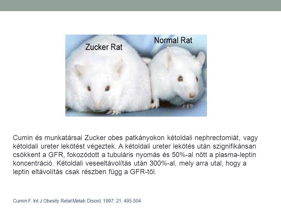 Cumin és munkatársai Zucker obes patkányokon kétoldali nephrectomiát, vagy kétoldali ureter lekötést végeztek. A kétoldali ureter lekötés után szignif