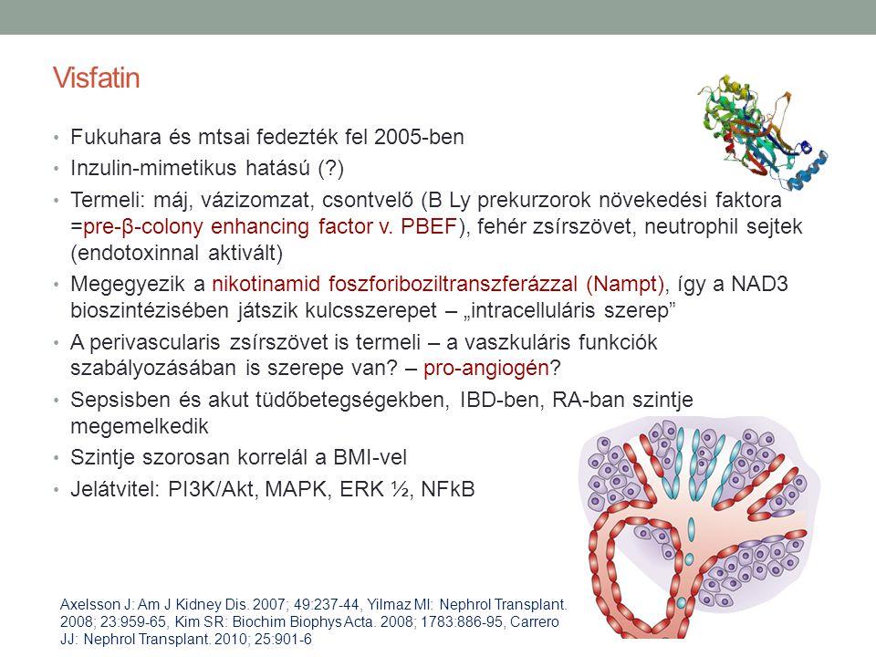 Visfatin Fukuhara és mtsai fedezték fel 2005-ben Inzulin-mimetikus hatású (?) Termeli: máj, vázizomzat, csontvelő (B Ly prekurzorok növekedési faktora