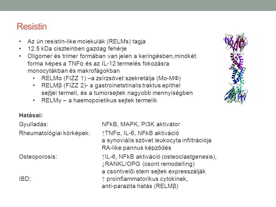 Resistin Az ún resistin-like molekulák (RELMs) tagja 12.5 kDa ciszteinben gazdag fehérje Oligomer és trimer formában van jelen a keringésben,mindkét f