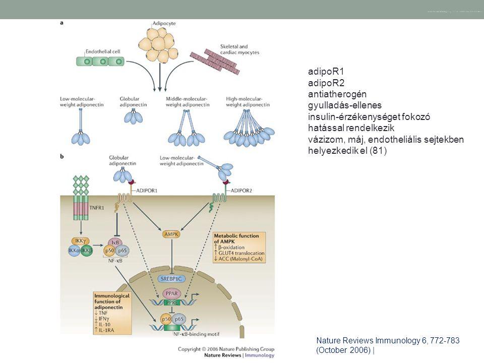 Nature Reviews Immunology 6, 772-783 (October 2006) | doi:10.1038/nri1937 Nature Reviews Immunology 6, 772-783 (October 2006) | adipoR1 adipoR2 antiat