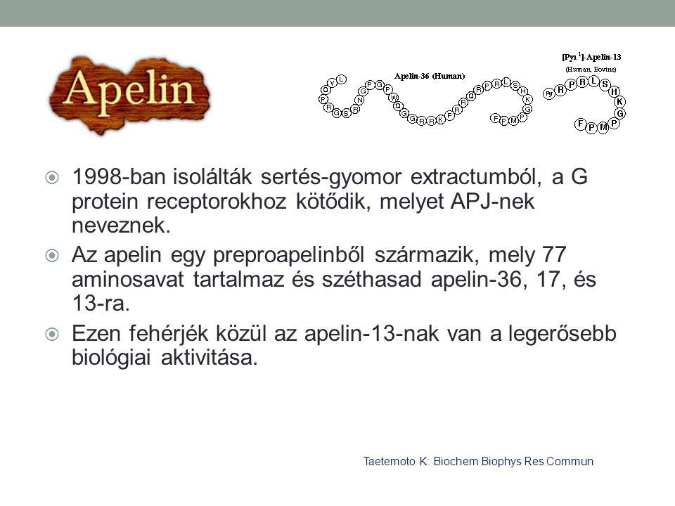  1998-ban isolálták sertés-gyomor extractumból, a G protein receptorokhoz kötődik, melyet APJ-nek neveznek.  Az apelin egy preproapelinből származik