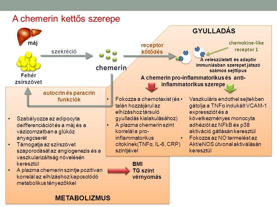 Fehér zsírszövet chemerin máj szekréció A chemerin kettős szerepe GYULLADÁS METABOLIZMUS autocrin és paracrin funkciók Szabályozza az adipocyta deiffe