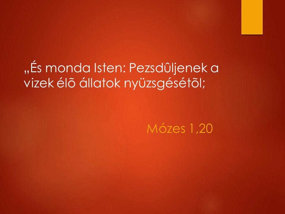 """""""És monda Isten: Pezsdûljenek a vizek élõ állatok nyüzsgésétõl; Mózes 1,20"""