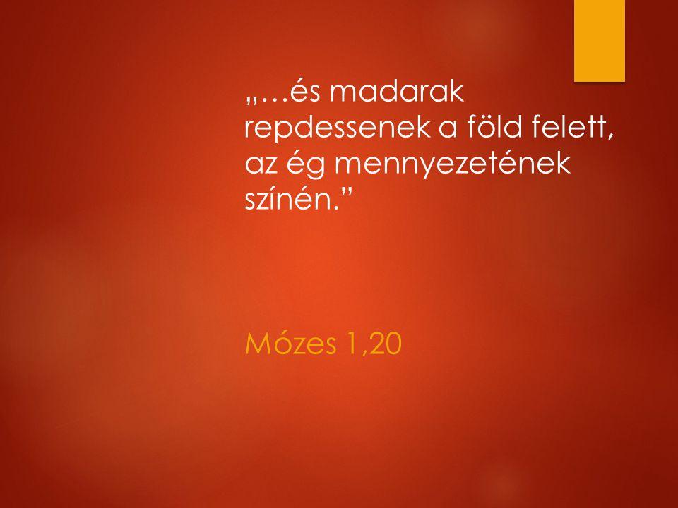 """""""…és madarak repdessenek a föld felett, az ég mennyezetének színén. Mózes 1,20"""
