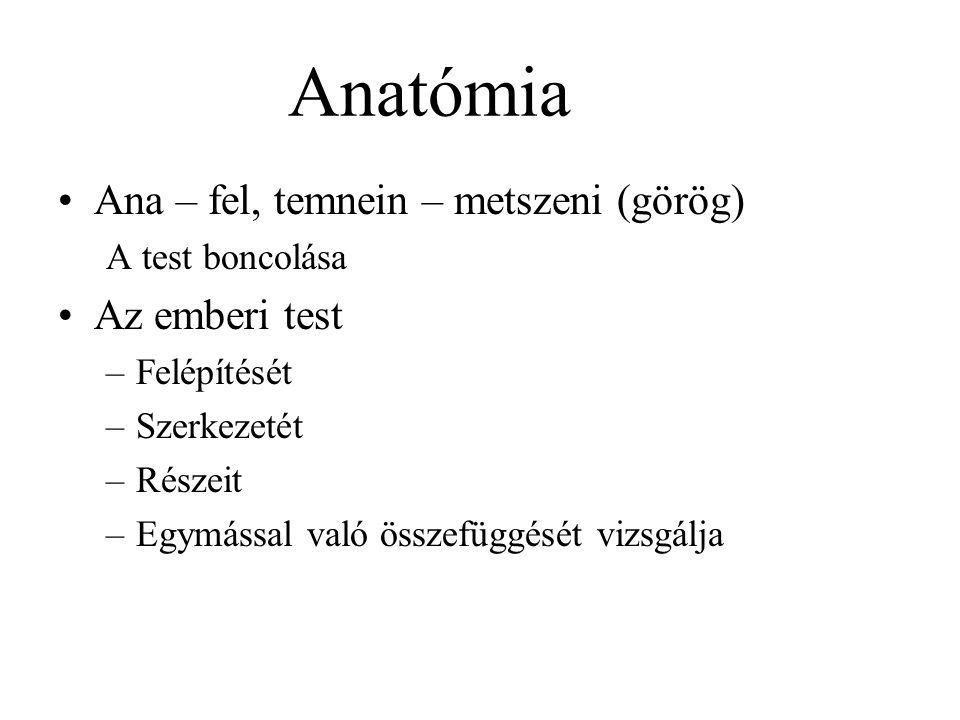 Anatómia Ana – fel, temnein – metszeni (görög) A test boncolása Az emberi test –Felépítését –Szerkezetét –Részeit –Egymással való összefüggését vizsgálja