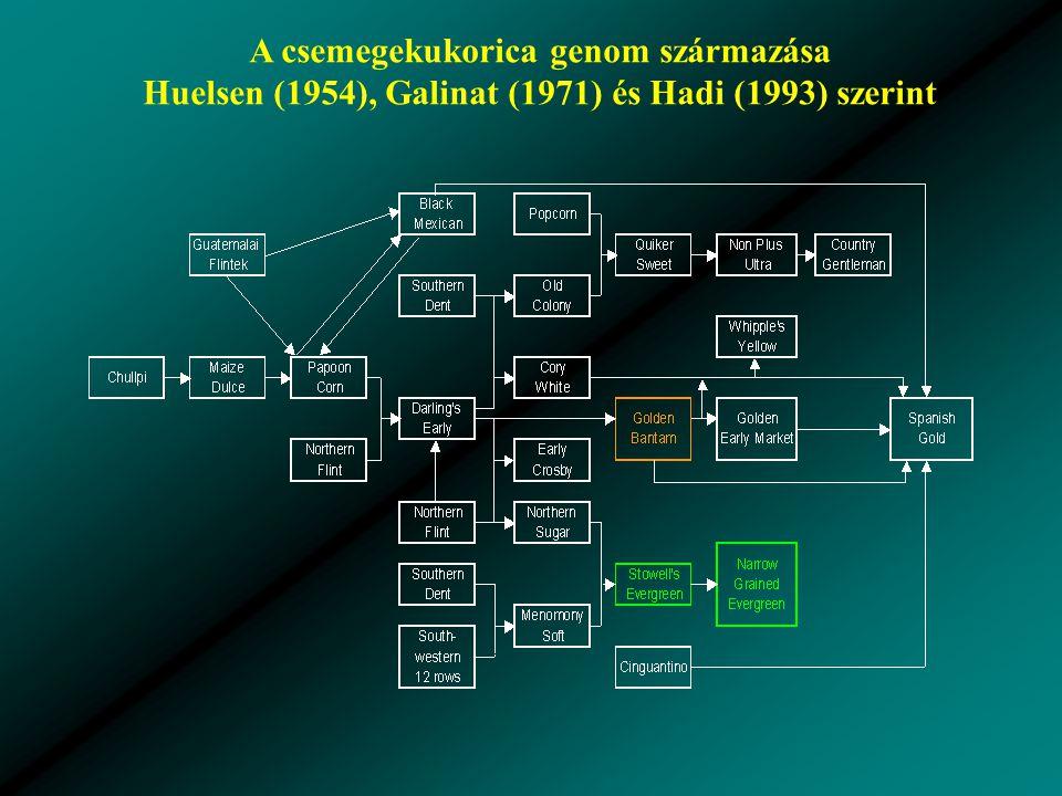 A csemegekukorica genom származása Huelsen (1954), Galinat (1971) és Hadi (1993) szerint