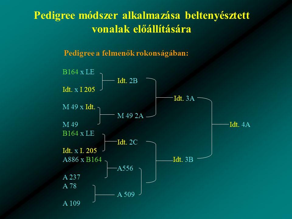 Pedigree módszer alkalmazása beltenyésztett vonalak előállítására Pedigree a felmenők rokonságában: B164 x LE Idt.