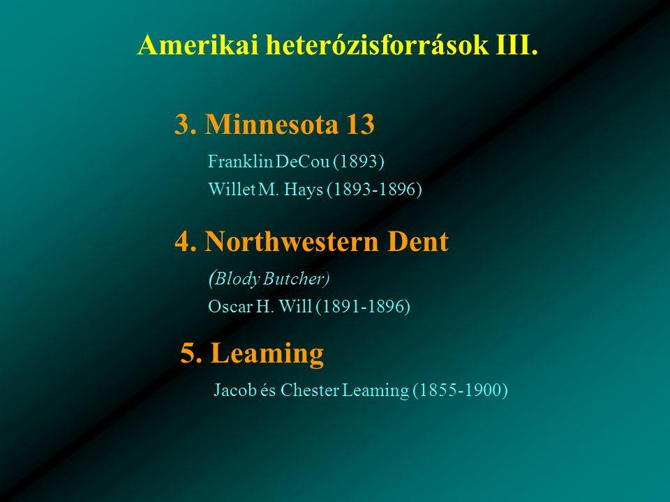 Amerikai heterózisforrások III.3. Minnesota 13 Franklin DeCou (1893) Willet M.